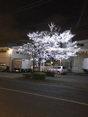 社屋入口桜イルミネーション 道路隔てた場所からの撮影